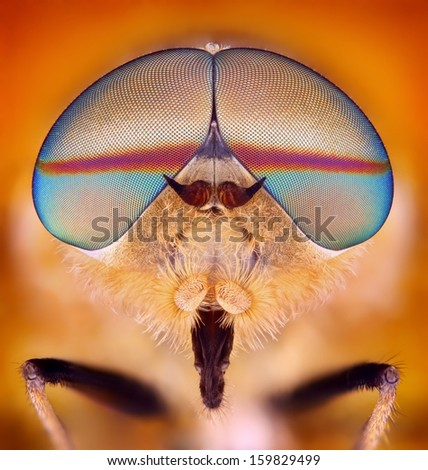 Extreme sharp and detailed study of Horsefly taken with microscope objective stacked from many shots into one very sharp photo.  - stock photo