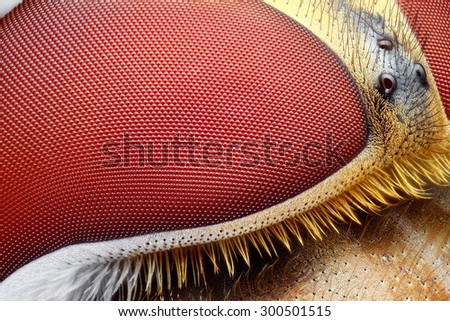 Extreme sharp and detailed study of Hoverfly head stacked from many images into one very sharp photo. - stock photo