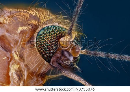 Extreme sharp and detailed study of mosquito head taken with microscope objective stacked from many shots into one photo - stock photo