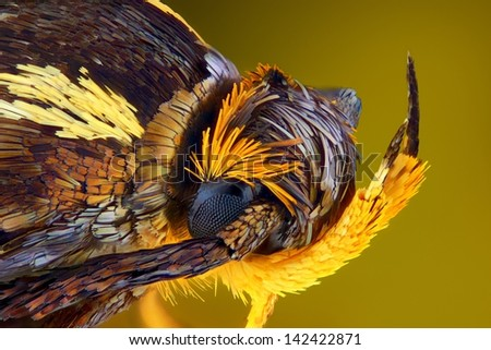 Extreme sharp and detailed view of colorful moth head taken with microscope objective stacked from many shots into one very sharp photo - stock photo