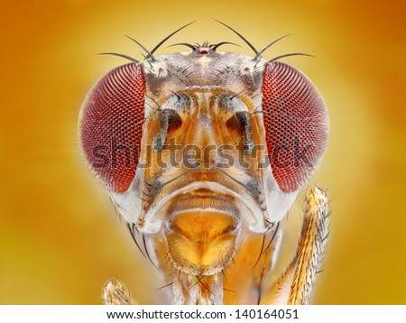 Extreme sharp macro portrait of fruit fly head taken with microscope objective stacked from many shots into one very sharp photo.