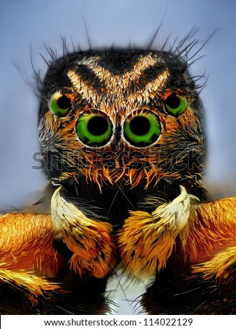 Extreme sharp portrait of jumping spider with green eyes taken with microscope lens - stock photo