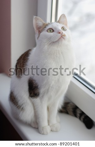 Extremely beautiful cat sitting on the window sill and looking up - stock photo
