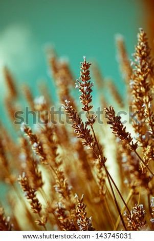 Extremely soft and abstract image of flower, shallow depth of field. - stock photo
