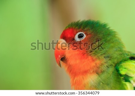 eye close up of beautiful bird. (soft focus)
