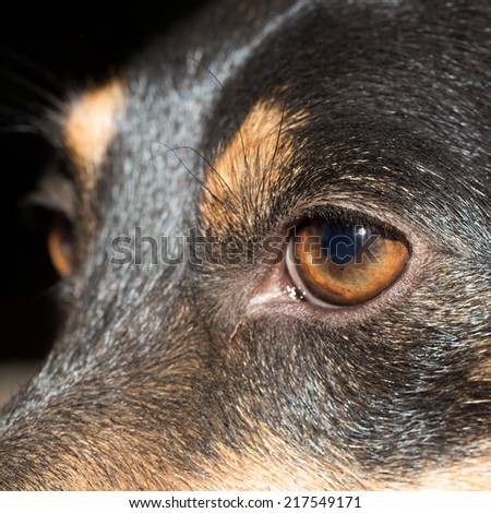 Eye dog. close-up