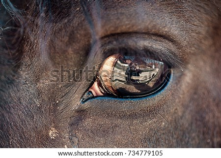 Eye in eye with a horse. Eye detail of a horse
