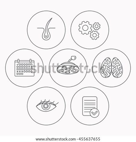 Eye, neurology brain and surgical lamp icons. Trichology linear sign. Check file, calendar and cogwheel icons.  - stock photo