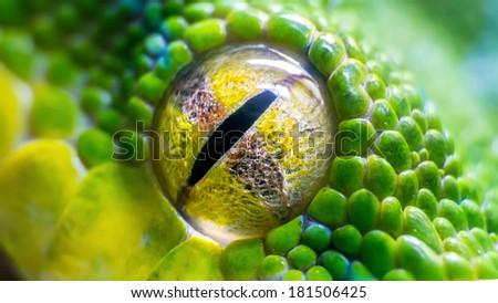 Eye of a green tree python (Morelia viridis) snake - stock photo