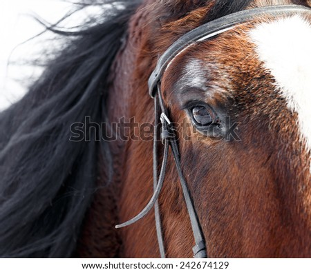 Eye of a horse close up