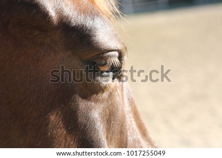 Eye of a horse in profile