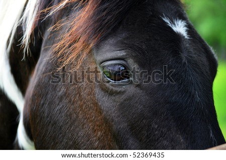 Eye of a Paint Horse