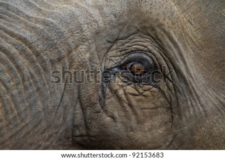 eye of an elephant - stock photo