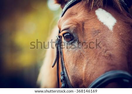 Eye of horse - stock photo