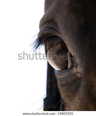Eye of horse, over white - stock photo