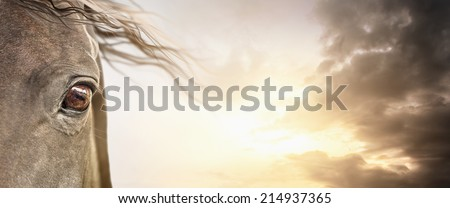 Eye of  horse with mane on cloudy sky , banner background - stock photo