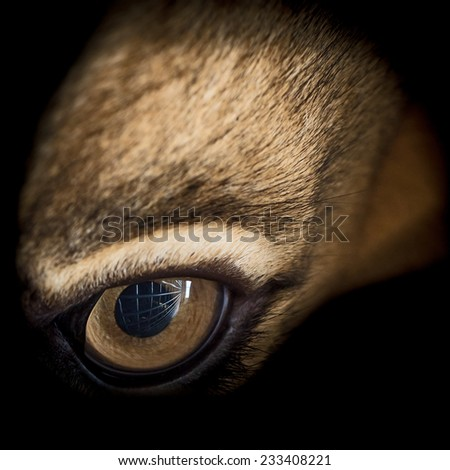 Eye of the lion - stock photo