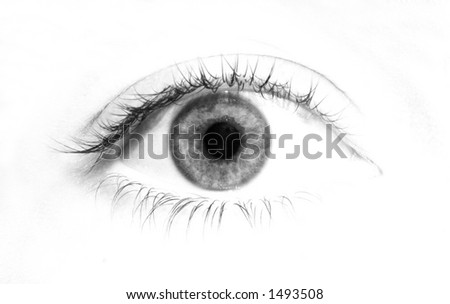 Eye on white background - stock photo