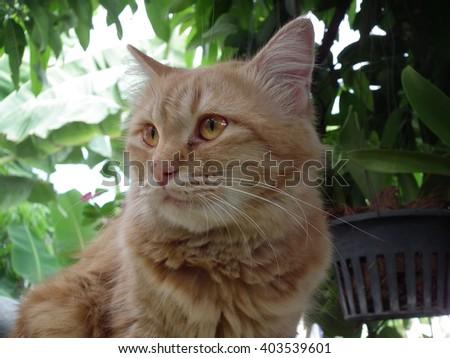 Eyes cat hunter - stock photo