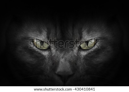 Eyes of black cat in dark, Hypnotic Cat Eyes - stock photo