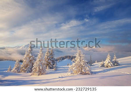 Fabulous Christmas landscape. Fir trees under the snow. Beautiful winter mountains - stock photo