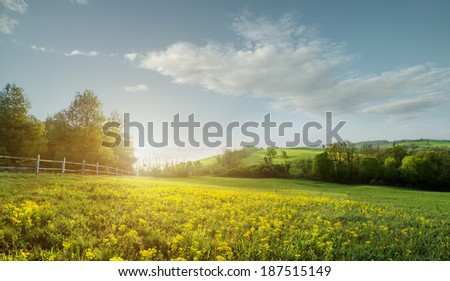 Fabulous landscape, field early in the morning , beautiful yellow flowers in the foreground - stock photo