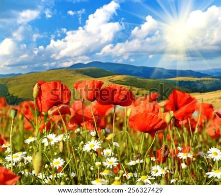 Fabulous landscape of poppies and daisies on a background of mountains in the sunlight - stock photo