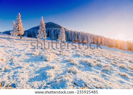 fabulous winter landscape  - stock photo