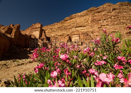 Facade of a beautiful building in the archaeological site of Petra, Jordan, with pink oleander flowers in the foreground. - stock photo