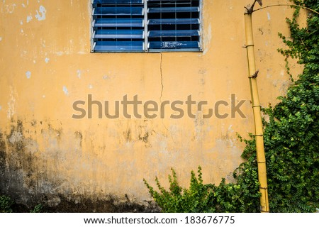 Facade of aged house. Wall of grungy and cracked yellow stucco with blue shuttered window. Old broken bamboo standing in front of it and greenery covering right part of wall. - stock photo
