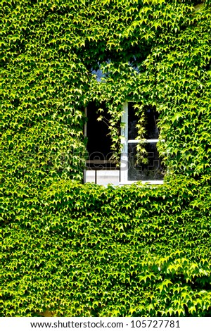 facade with open window overgrown with wine - stock photo