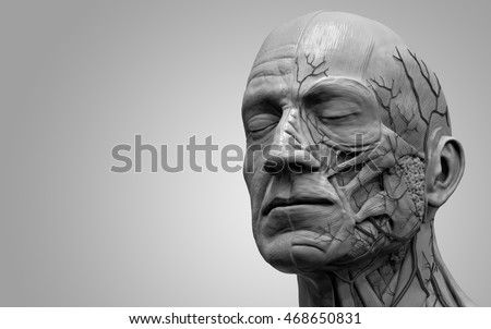Face and neck anatomy isolated , medical image reference of human anatomy , realistic 3D rendering in black and white
