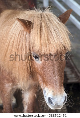 Forelock Stock Photos Royalty Free Images Amp Vectors Shutterstock