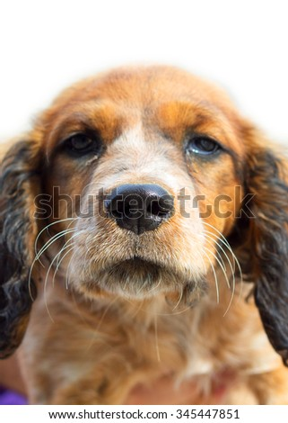 face hunting dog