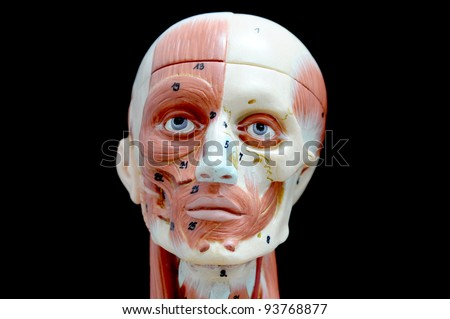 face muscle - stock photo