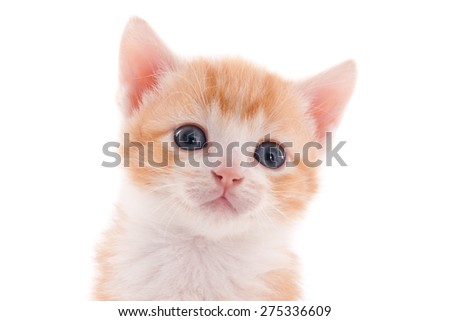 Face of a cute ginger kitten, isolated on white - stock photo