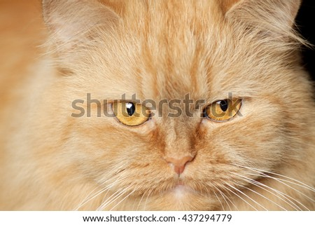face of a red cat - stock photo