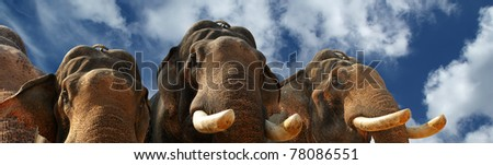 Face of Asian Elephant, or Indian, Kerala, South India - stock photo