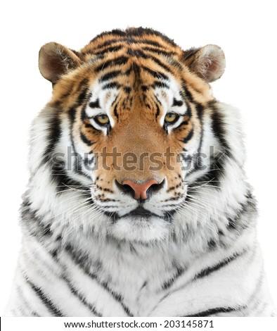 Face of beautiful tiger - stock photo