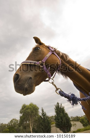 Face of brown horse with sky and trees in background - stock photo