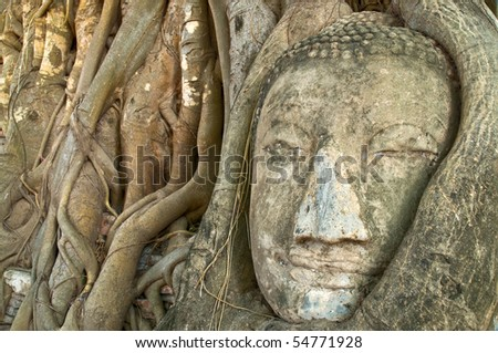 Face of Buddha covered by overgrown roots of a fig tree, Wat Mahathat, Ayutthaya, Thailand - stock photo