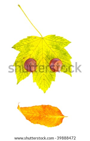 face of the leaves , looking at the right