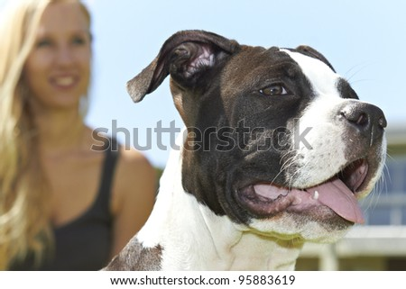 Face of young female Pit Bull with owner in background - stock photo
