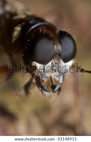 Face shot of a tiger beetle - stock photo