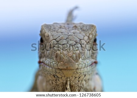 Face to face - stock photo