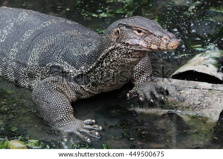 face Water monitor asian