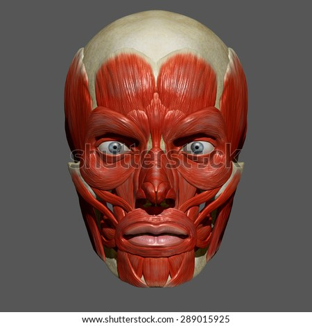 facial muscles stock images, royalty-free images & vectors, Human Body