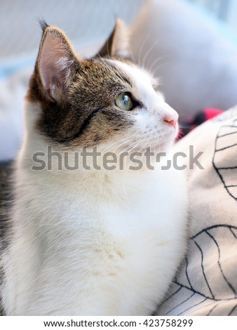 Facial Portrait of Beautiful Bi Color Brown White Tabby Domestic Short Cat with Green Eyes Looking Up to the Side - stock photo