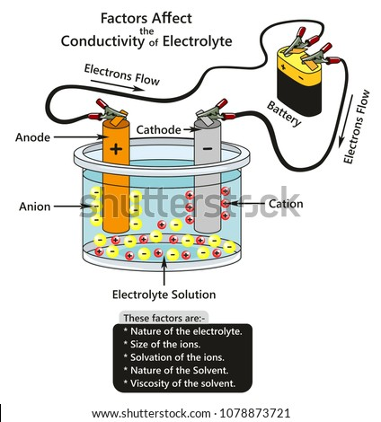 Factors Affect Conductivity Electrolyte Infographic Diagram Stock