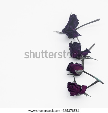 faded dried rose isolated on white background - stock photo